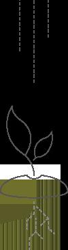 Icon-wachstum